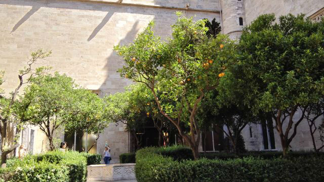 A La Lonja belső kertje - a narancsfa liget