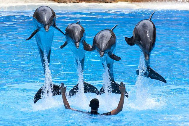 Loro Park, delfin show
